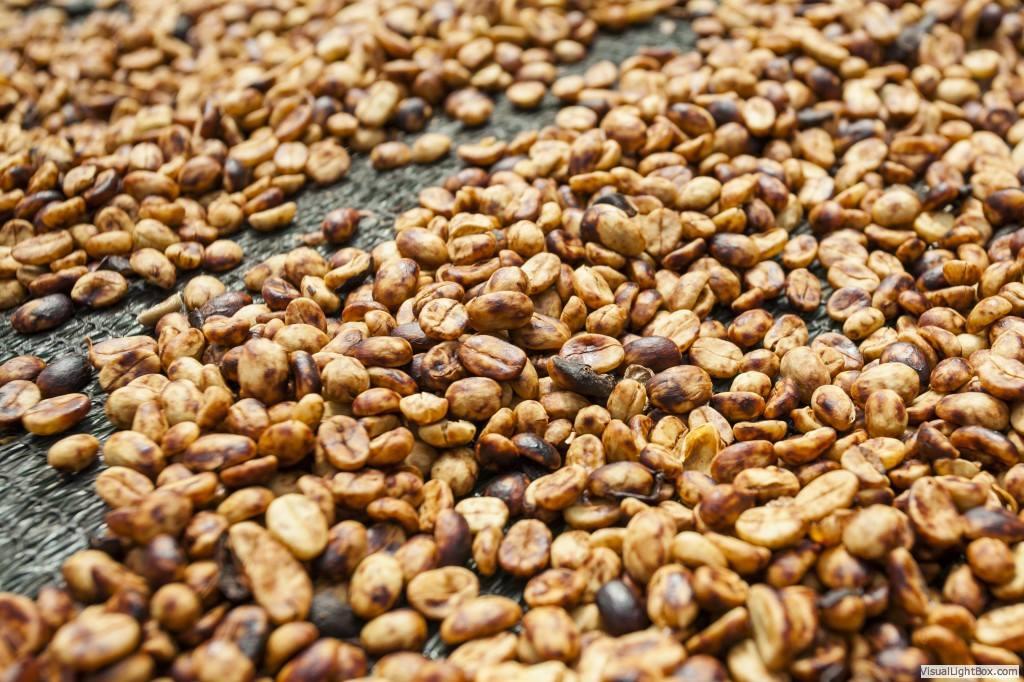 Best Costa Rican Coffee Brands